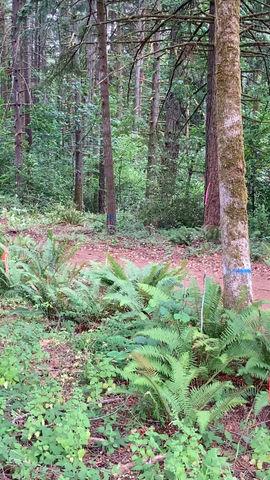 Timber! Logging begins at entrance: a video