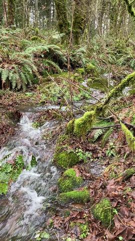 winter creek: video