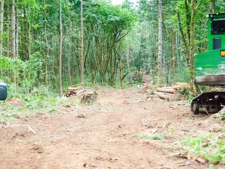 Entrance: 7.20.2021: first week of logging