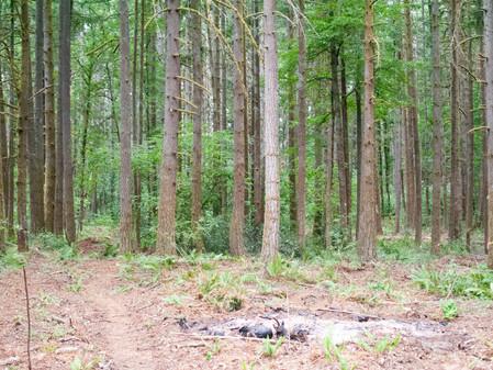 Lots 1-6: before logging