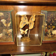 Natural Display in Cases