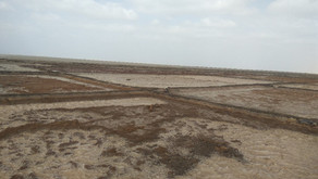 DETECTION AND PREVENTION OF TOXIC GAS ACCIDENTS IN SALT WELLS OF KUTCH REGION
