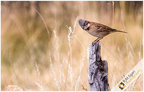 Ref.30012 - The Lonely Bird (Argentina)