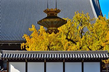 西本願寺銀杏.jpg
