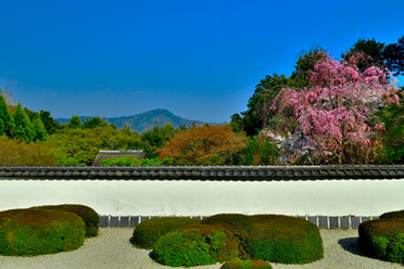 正伝寺庭園.jpg