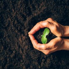 Farmer-hand-holding-young-plant.-Top-vie
