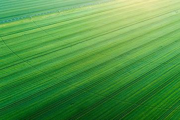Green crop filed