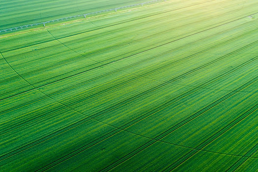 Green crop filed