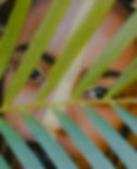 rachel-pfuetzner-642852-unsplash.jpg