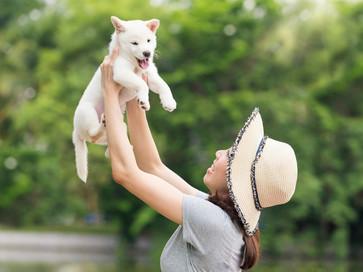 小型犬~大型犬まで幅広く幼稚園に通っています.jpg