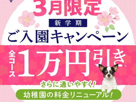 犬の幼稚園料金改定&入園キャンペーン!