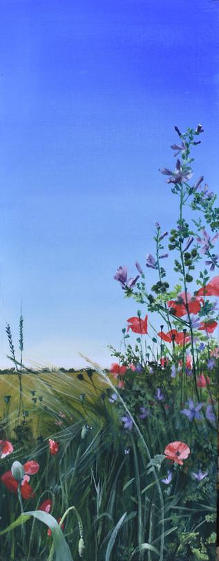 Field Edge Flowers 4