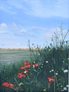Field Edge Flowers 1