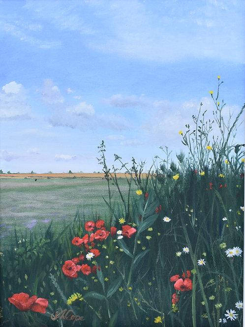 Field Edge Flowers1