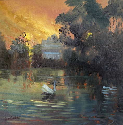 Barnes Pond Cygnets