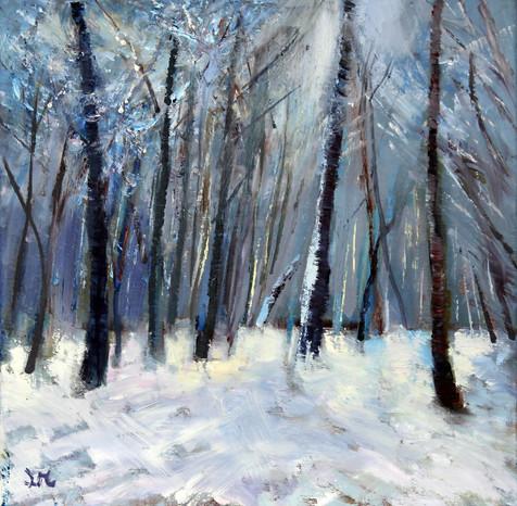 Birch Trees in Snow Wimbledon Common