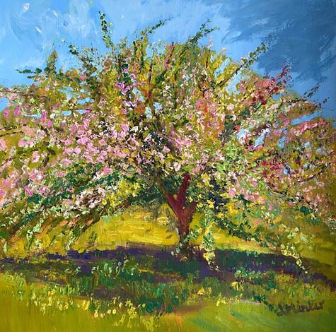 Hawthorn in Bloom