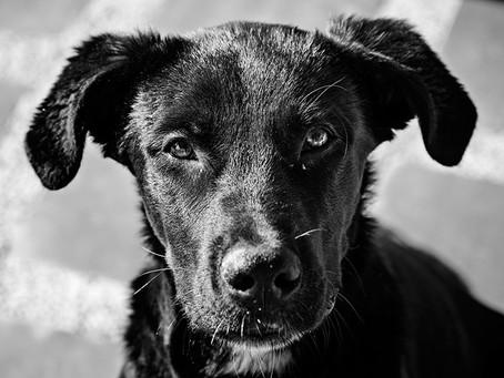 Aumentan los casos de maltrato animal durante la pandemia