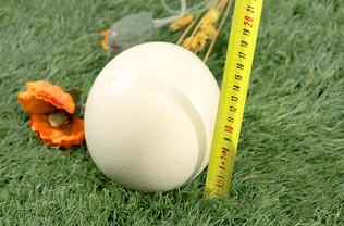 Huevo de avestruz