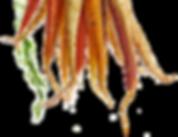 Carrots 2.png