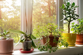 What does Partial Shade mean?