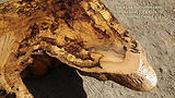 Oak burl coffee table 52 45 Hamari 4.jpg