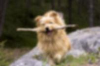 dog-622695_1920.jpg