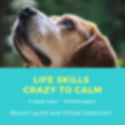 Life Skills Crazy to calm (3).png