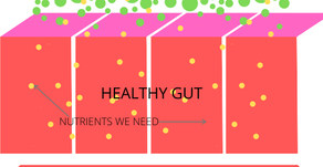 6 CAUSES OF LEAKY GUT