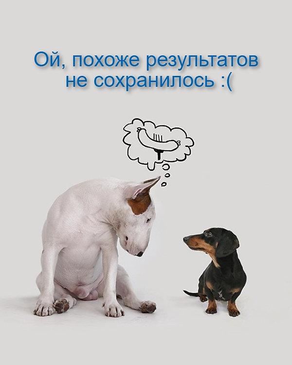 1511127403-malinka_4.jpg