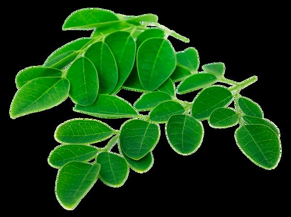 Moringa Leaves_80972874_web.png