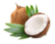 Coconut_69294969_web(1).png