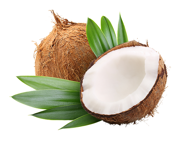 Coconut_69294969_web(1).png