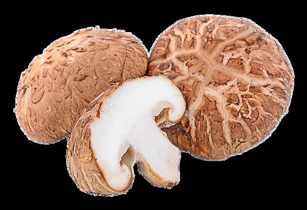 Shitake Mushrooms_144459645_web.png