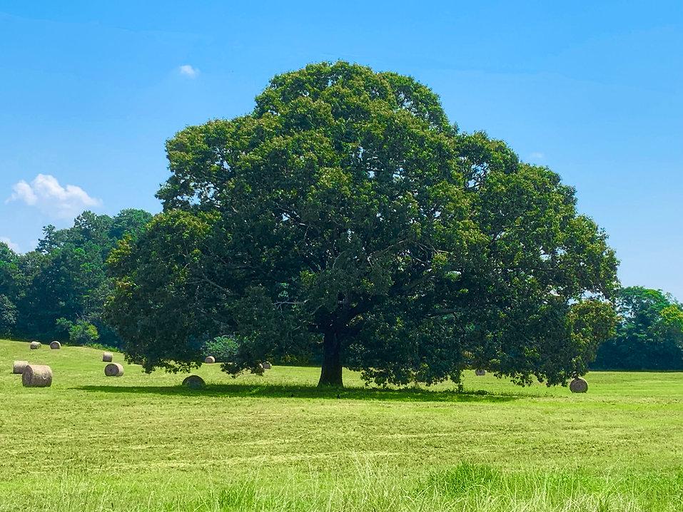 tree edit33.jpg