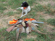 Scout_pheasant_opener_2015.jpg