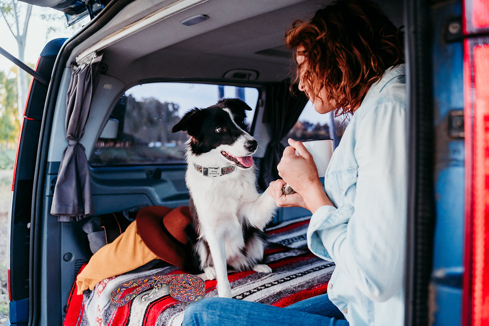 woman-border-collie-dog-van-travel-conce