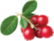 Cranberry-Foxberry-Lingonberry_92103207.