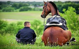 Как использовать лошадей в бизнес-образовании