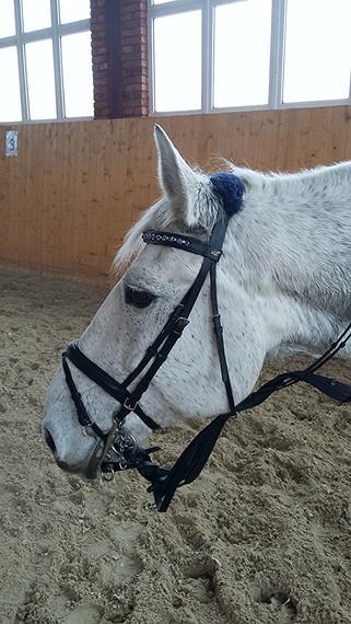 Новые лошади в Усадьбе Красивая!