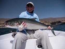 fishing Oman, Arabian Fly, milkfish
