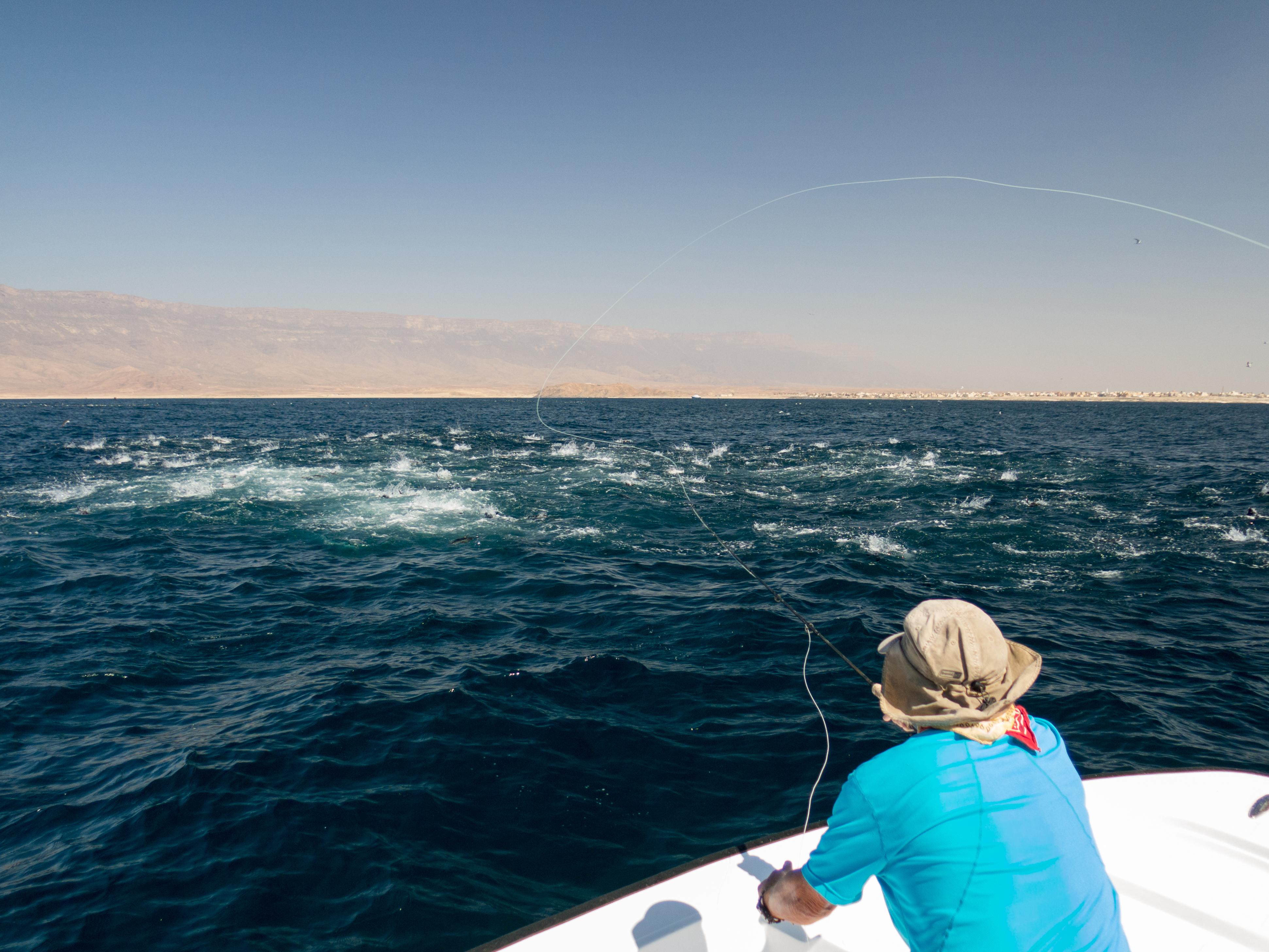 fishing Oman, Arabian Fly, tuna