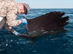 fishing Oman, Arabian Fly, sailfish