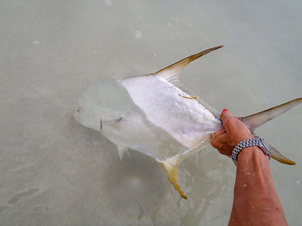 Arabian Fly Sport Fishing, salt water fly fishing, Oman, fishing