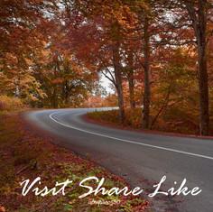 Roads in Woods