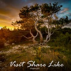 Pine to the Ground