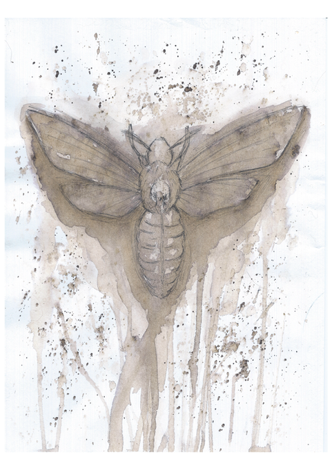 Ink moth