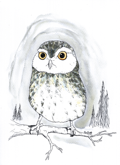 Spotted Owl edit