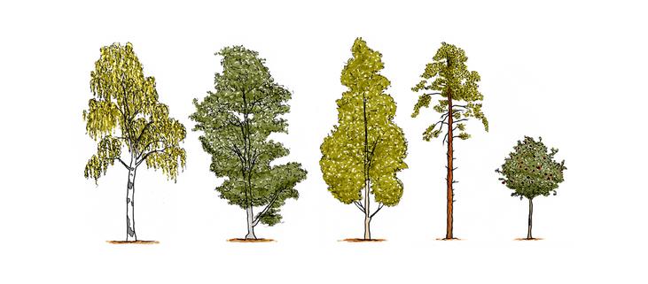 Ser inte skogen för träden