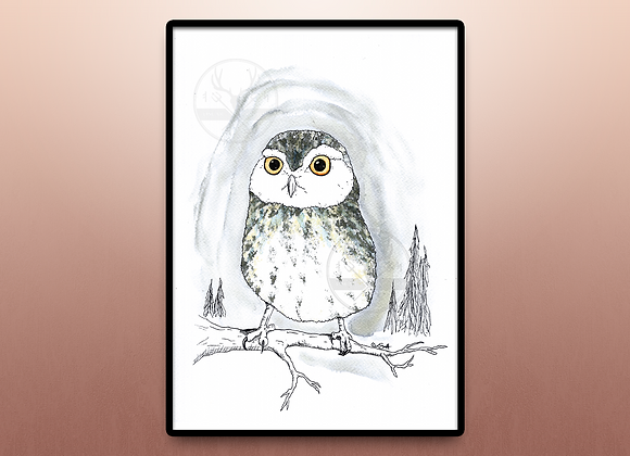 Spotted Owl TRYCK